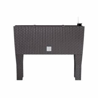 Prosperplast Truhlík RATO CASE HIGH hnědý 60x25x46cm